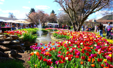 It's the most Supercalifragilisticexpialidocious Tulip Time ever!