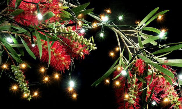 Christmas Happenings In The Southern Highlands